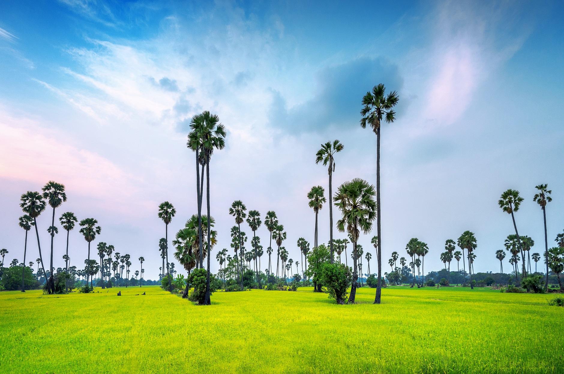 Rice import across the globe