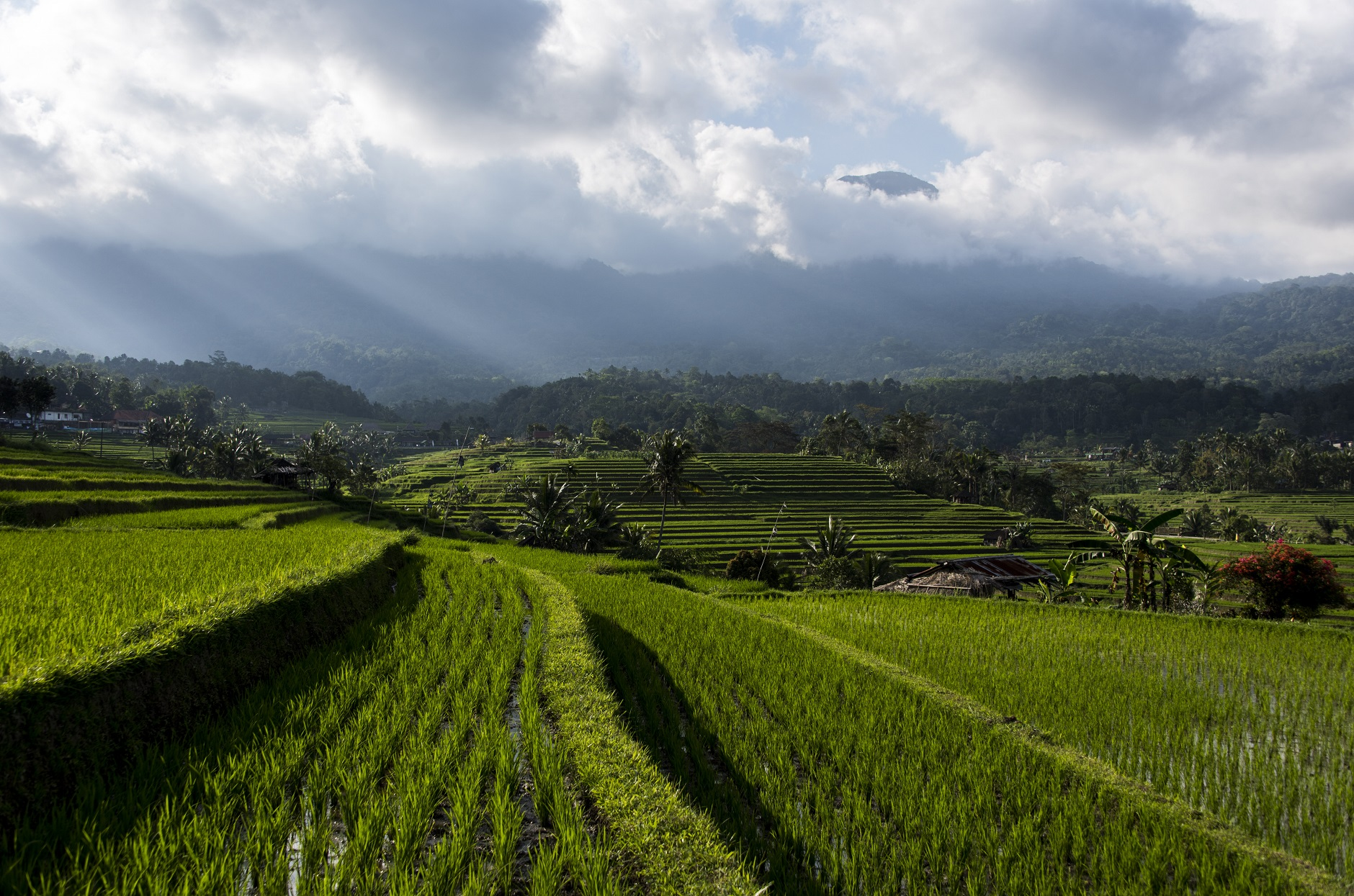 India: Paradip port to handle non-basmati rice export