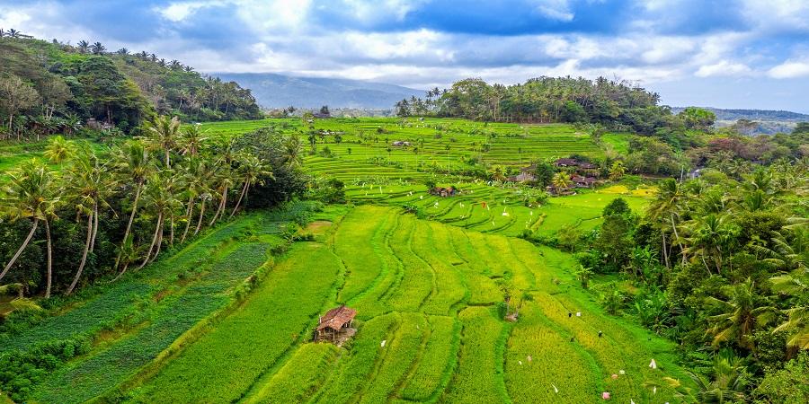 The increasing global demand of Indian Non-Basmati Rice Export