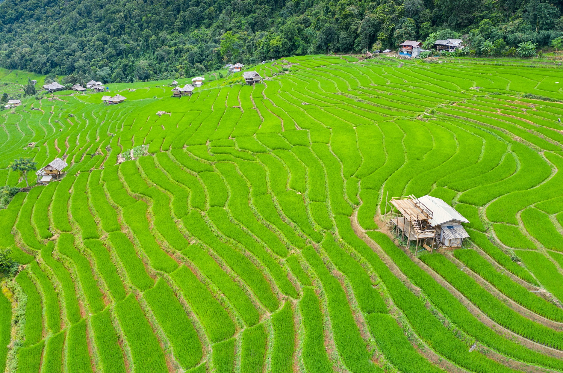 Philippines opens door to import rice from India