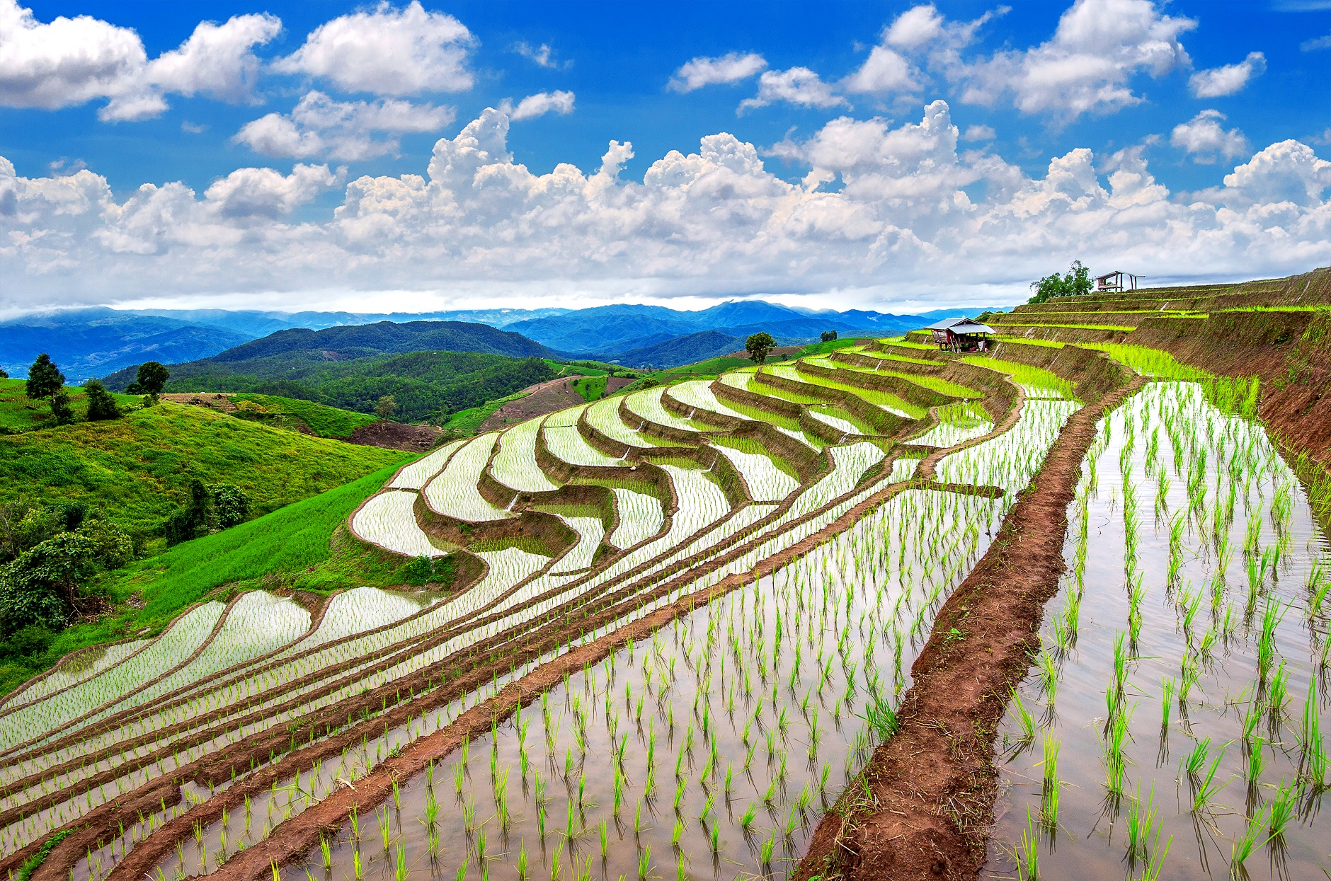 Rice exporting countries maintain a high price variance